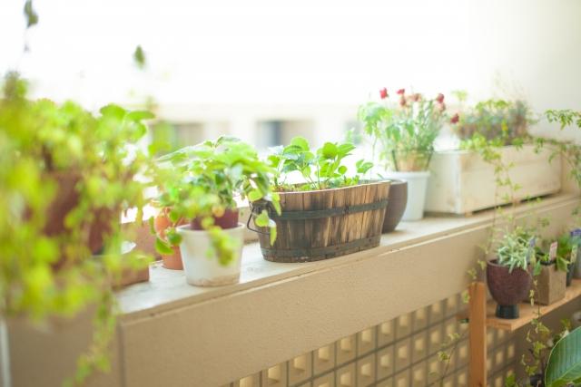 観葉植物の光合成