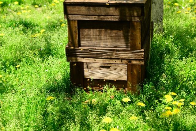 養蜂、巣箱